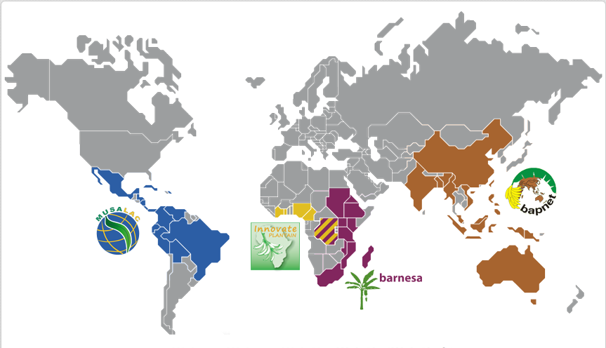 Banana research networks around the world