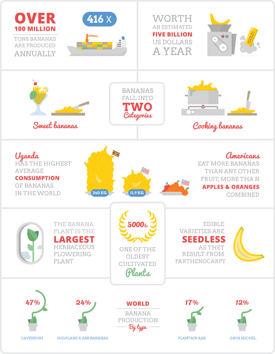 Infographic about the banana
