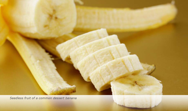 Banana-Biology-2017-17