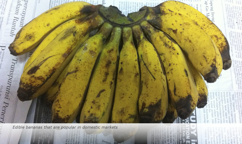 Banana-Biology-2017-19
